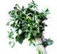 Fresh Fenugreek Methi Leaves [Bunch]